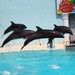 【イルカ ショーのある水族館】関東近郊の絶対満足できるイルカショー厳選3選